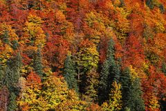 Jesień krajobraz w lasach, Rumuńscy Carpathians Zdjęcie Stock