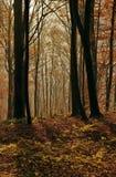 Jesień krajobraz w lesie Obrazy Royalty Free