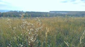 jesień krajobraz, więdnąca trawa, cyny roślina zdjęcie stock