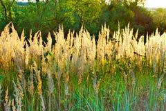 Jesień krajobraz z żółtą trawą Obraz Stock
