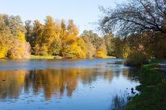 Jesień krajobraz z żółtymi drzewami 11 i stawem 10 2018 zdjęcie stock
