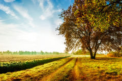 Jesień krajobraz z dębowym drzewem obrazy stock