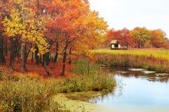 Jesień krajobraz z dębowymi drzewami i osamotniony dom blisko stawu Fotografia Stock