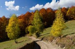 Jesień krajobraz z drogą Zdjęcia Stock