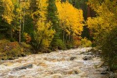 Jesień krajobraz z drzewami i rzeką Obraz Stock