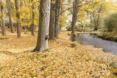 Jesień krajobraz z drzewami, rzeką i spadać żółtymi liśćmi, Fotografia Stock