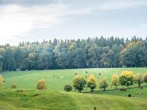 Jesień krajobraz z drzewo przodem i kolorowymi liśćmi fotografia royalty free