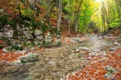 Jesień krajobraz z halną rzeką i kolorowym drzewem Fotografia Royalty Free