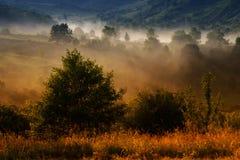 Jesień krajobraz z mgłą Obraz Royalty Free