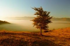 Jesień krajobraz z mgłą Fotografia Royalty Free