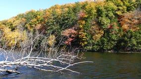 Jesień krajobraz z nieżywym drzewem i stawem zbiory wideo
