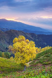 Jesień krajobraz z pięknym drzewem w górach Obraz Royalty Free