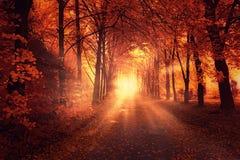Jesień krajobraz z słońca światłem Zdjęcie Royalty Free