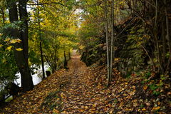 Jesień krajobraz z spadać liśćmi Obraz Royalty Free