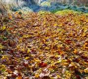 Jesień krajobraz z zakrywającym spadać liścia śladem Obrazy Stock