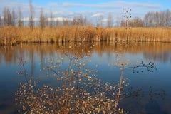 Jesień krajobrazowy malowniczy jezioro z wysuszoną yellowed trawą na brzeg obrazy royalty free