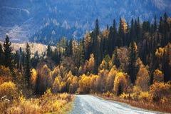 jesień kraju lasowa halna stara droga Obraz Stock