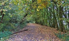 Jesień kraju lasowy park - chodzi w Zjednoczone Królestwo zdjęcie stock