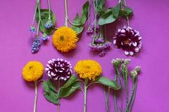 Jesień kwiatów sezonowy mieszkanie kłaść na purpurowym tle obrazy royalty free
