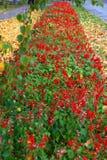 Jesień kwiatu aleja żyje out swój ostatnich dni obrazy royalty free