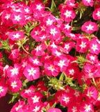 Jesień kwiaty Fotografia Stock