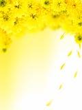 jesień kwitnie kolor żółty Fotografia Royalty Free