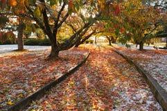 Jesień lód Zdjęcie Stock