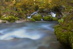 Jesień las i świeży halny strumień Fotografia Stock