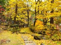 Jesień las i chodząca ścieżka obrazy royalty free