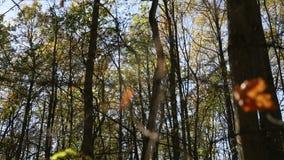 Jesień las na chmurnym dniu, pajęczyna zdjęcie wideo