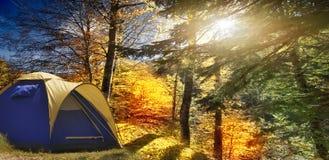 Jesień las na jaskrawym słonecznym dniu fotografia stock