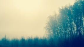 Jesień las na mgłowym dniu Zdjęcie Royalty Free