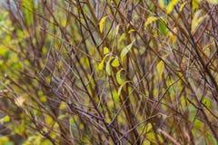 jesień las opuszczać kolor żółty zdjęcie royalty free