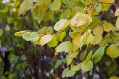 jesień las opuszczać kolor żółty obraz royalty free