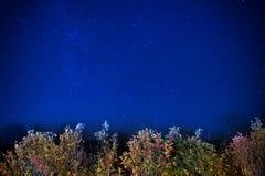 Jesień las pod błękitnym ciemnym nocnym niebem Fotografia Royalty Free