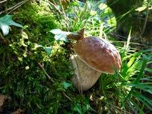 Jesień, las, strzała zdjęcia stock