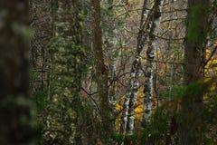 Jesień las w dżdżystej pogodzie Zdjęcie Royalty Free