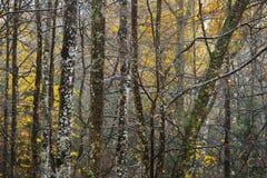Jesień las w dżdżystej pogodzie Obrazy Stock