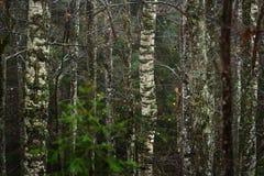Jesień las w dżdżystej pogodzie Obrazy Royalty Free