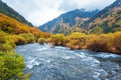 Jesień las w jiuzhaigou Obrazy Stock
