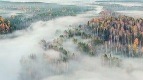 Jesień las w mgle. Czasu upływ zbiory wideo