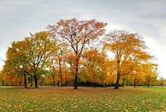 Jesień las w parku, Bratislava Zdjęcie Stock