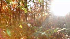 Jesień las wolno ono ślizga się przed kamerą zbiory wideo