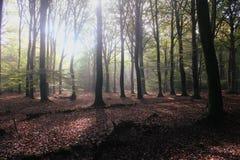 Jesień las z światłem słonecznym w tle Zdjęcia Royalty Free