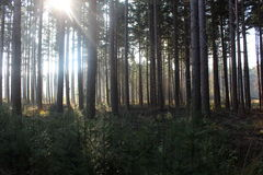 Jesień las z światłem słonecznym w tle Zdjęcia Stock