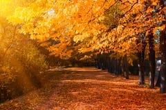 Jesień las z footpath prowadzi w scenę Światło słoneczne promienie przez jesieni gałąź kosmos kopii zdjęcie royalty free