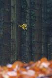 Jesień las z jeden gałąź na drzewie Fotografia Stock