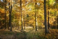 Jesień las z kolorowym ulistnieniem, sezonowy natury tło obraz stock