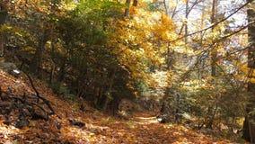 Jesień las z liśćmi zdjęcie wideo