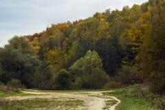 Jesień las z obfitolistnymi drzewami i footpath obrazy stock